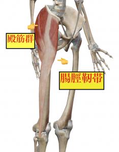 O脚の原因は硬くなった筋肉